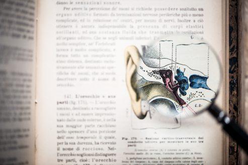 Comment fonctionne le système auditif ?